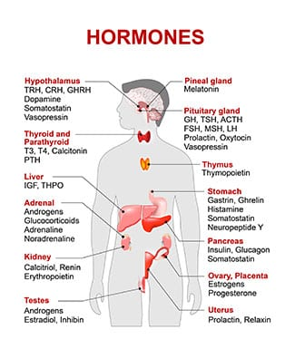 hormone-therapy-solutions-st-pete-fl